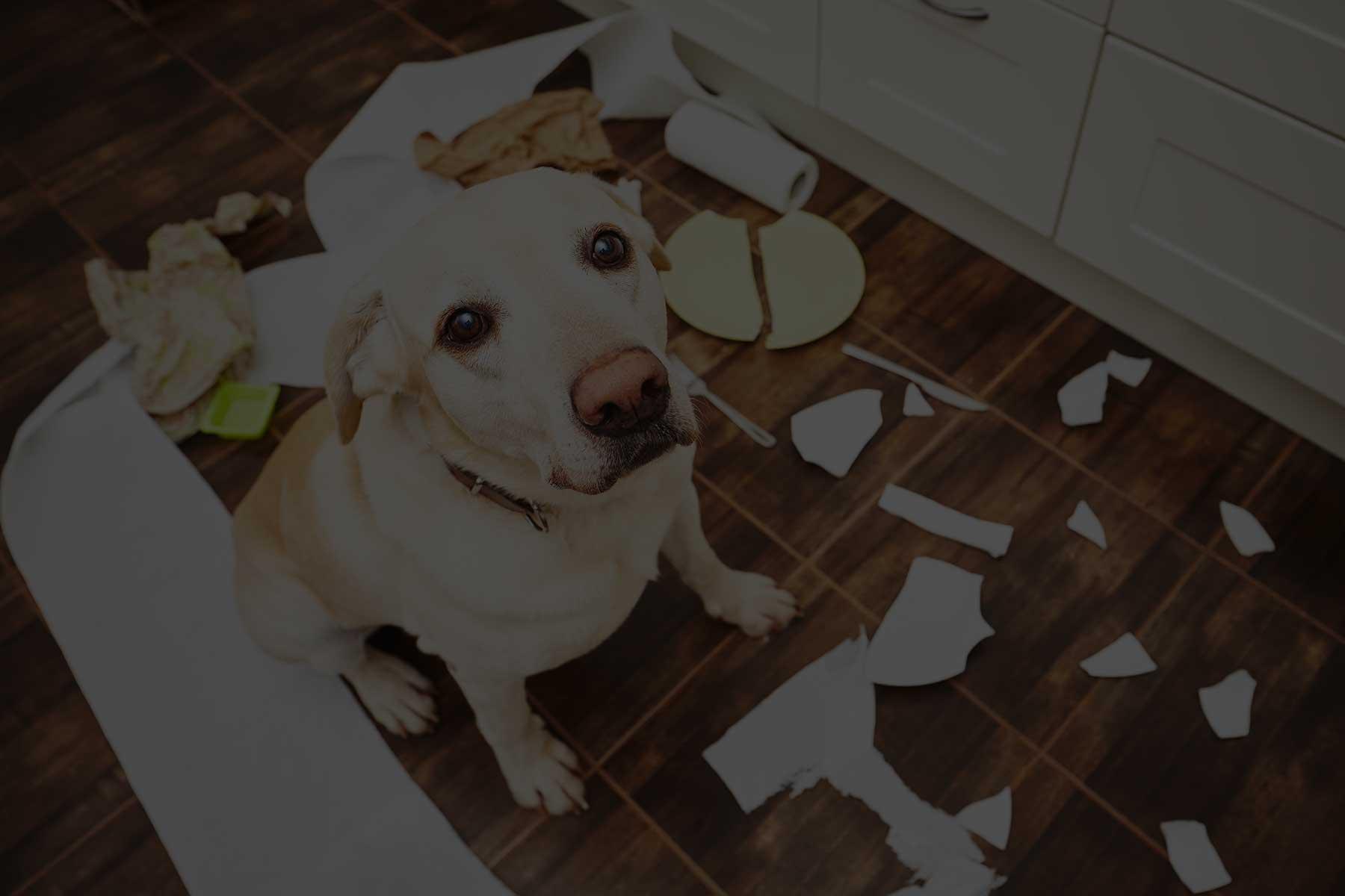 dog obedience training charleston sc